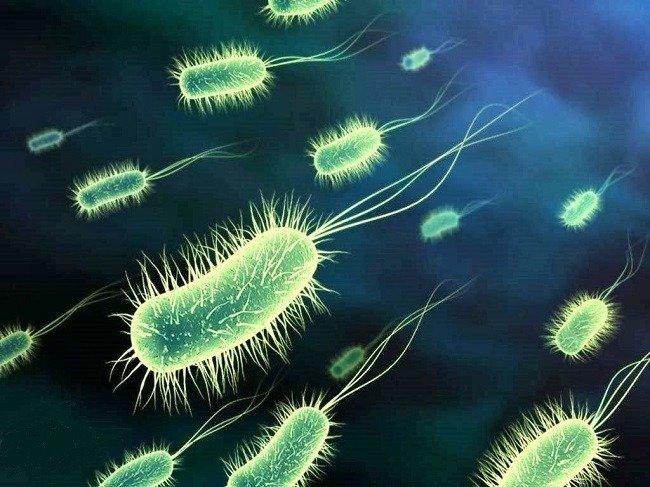 mikrobiyoloji nedir