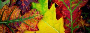 Otantik Dekorasyon İçin Renk Önerileri