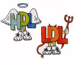 HDL ve LDL Nedir ?