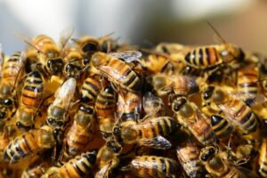 Arılar Hakkındaki Şaşırtıcı Bilgiler