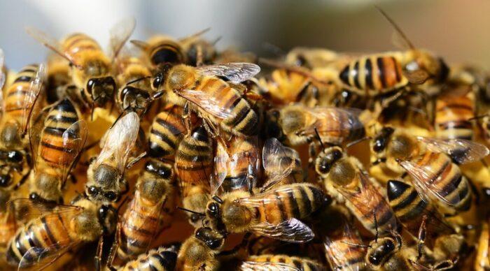 Arılar Hakkında Şaşırtıcı Bilgiler
