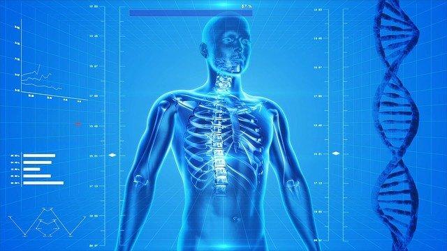 Vücudumuzun Kusursuz Düzeni Nasıl Çalışır