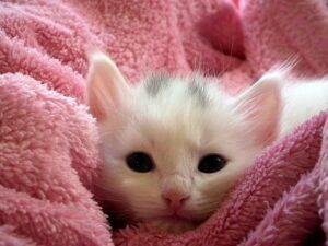 Kedi Davranışları Ve Bakımı