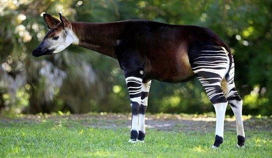 Dünyanın En İlginç ve Tuhaf Görünümlü Hayvanları