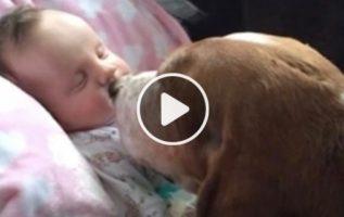 Ailenin Basset Hounds'u Son Anlarında Bebeği Rahatlatıyor