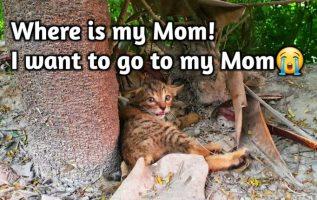 Annesinden Acımasızca Ayrılan Çaresiz Yavru Kediyi Kurtar