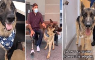 Bacağı kesilen kurtarma köpeği, bacağını da kaybeden emektar tarafından evlat edinildi