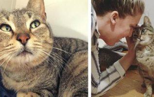 Başıboş Kedi, Yavrularını Doğurmak İçin Bir Evin İçine Gizlice Girdiğinde Kendini Kurtarır