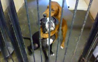 Bu fotoğraf iki köpeğin hayatını kurtardı