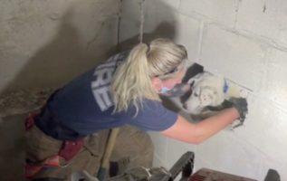 İtfaiye, Beş Gün Boyunca Duvarlar Arasında Sıkışıp Kalan Köpeğe Yardım Etmek İçin Devreye Girdi