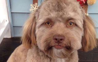 Köpek Yogi, Kime Benzediği İçin Viral Oluyor