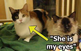 Kör Kedi Ve Gören Kız Kardeşi Sadece Birlikte Evlatlık Olmak İstiyor