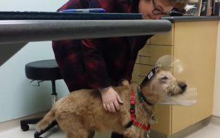 Kör Köpek Sonunda Görmek İçin Ameliyat Oldu - Tepkisi Gözyaşlarına Boğuldu