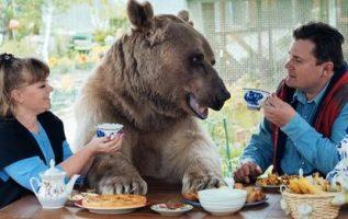 Rus Çift, 25 Yıl Önce Evlat Edindiklerinden Beri 300 kiloluk Bir Ayı Evcil Hayvanıyla Yaşıyor