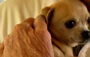 Yaşlı Adam Cesurca Evcil Köpeğini Kurtarmak İçin Yüzüne Bir Ayı Yumrukladı